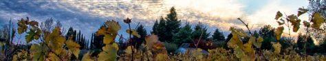 cropped-sky-photo.jpg